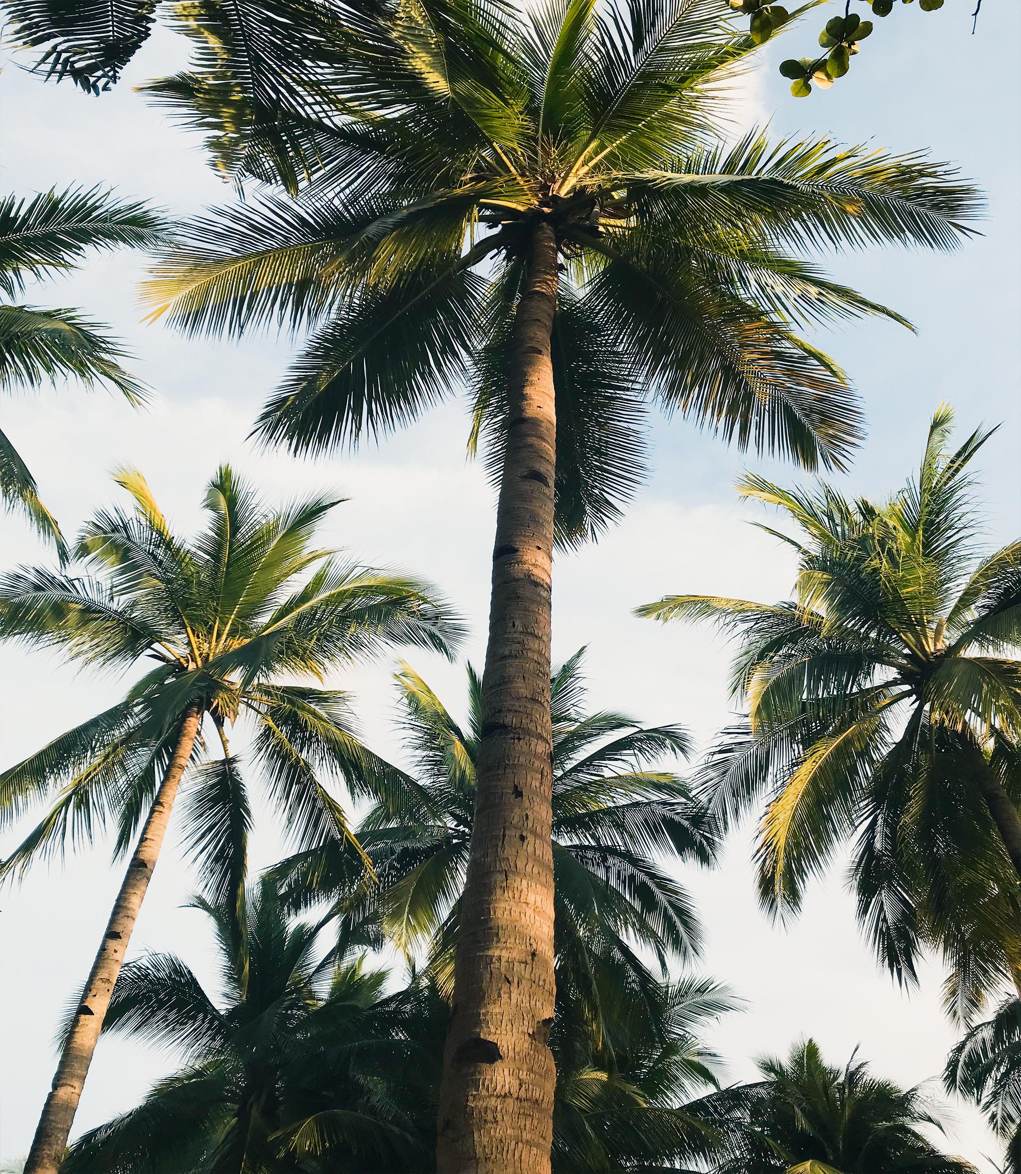 potatura_alberi
